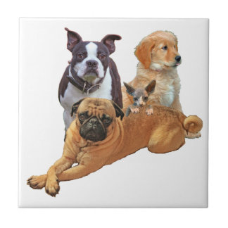 Dog posse with cat tile