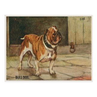 Dog Postcard With Tough Bull Dog