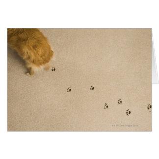 Dog Prints on Carpet Card