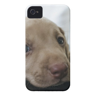 Dog Puppy Blue Eyes Blue Eye Pet Look Cute iPhone 4 Case-Mate Cases