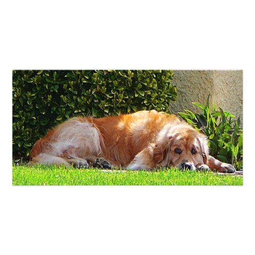 Dog Relaxing Photo Card Template