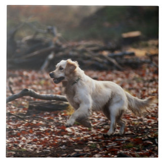 Dog running on dry leaves tile