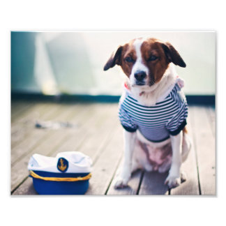 Dog Sailor Sitting Cap Clothes White Nautical Photo Print