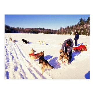 Dog sledding, Mont Ste Marie, Quebec Postcard