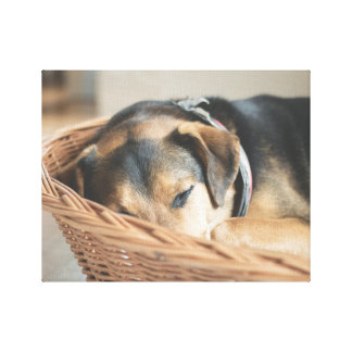 Dog Sleeping in Basket Photo Canvas Print