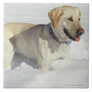 Dog standing in snow tile