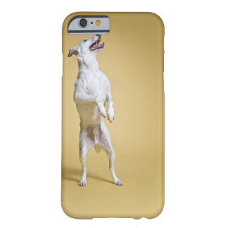 Dog standing on hind legs barely there iPhone 6 case