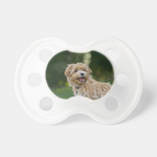 Dog Summer Out Pet Animal Fun Happy Vacation Pacifier