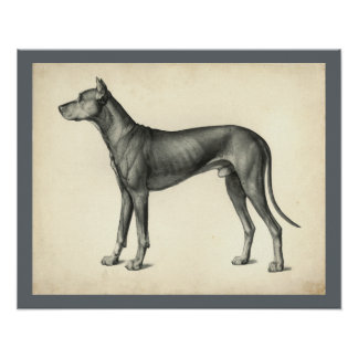 Dog Surface Topography Anatomy Print