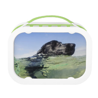 Dog swimming in water lunch boxes