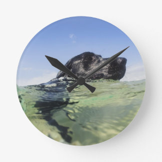 Dog swimming in water wall clocks