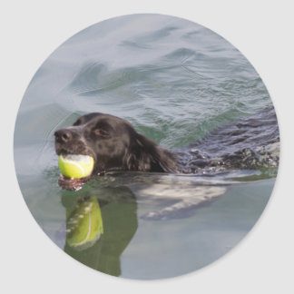 Dog swims with ball in mouth classic round sticker
