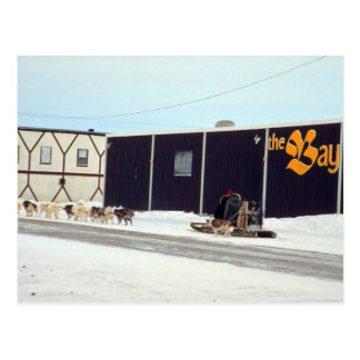 Dog team at the bay Churchill Manitoba Postcards