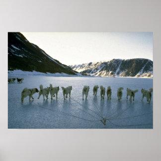 Dog team, Greenland Poster