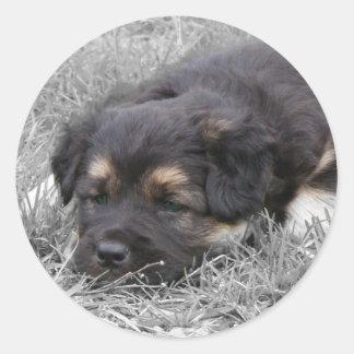 Dog Tired, customizable Classic Round Sticker