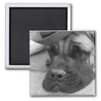 Dog Tired Magnet