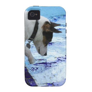 Dog touching water at the swimming pool vibe iPhone 4 cases