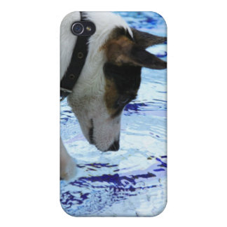 Dog touching water at the swimming pool iPhone 4 covers