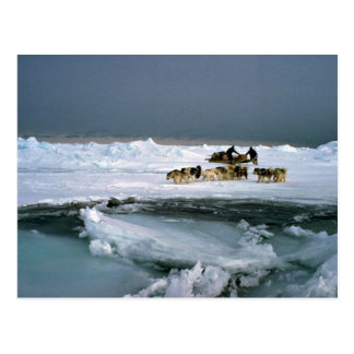 Dog travel on ice, Ellesmere Island, Northwest Ter Postcard
