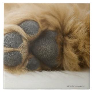 Dog, view of leg tile