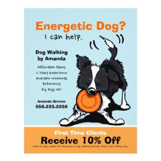 Dog Walker Walking Ad Coupon Border Collie Full Color Flyer