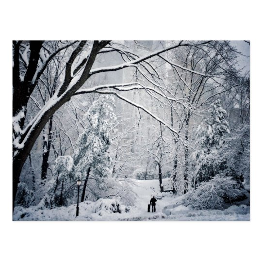Dog Walking In A Winter Wonderland Postcard