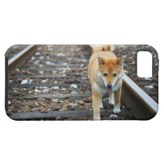 Dog walking track iPhone 5 cases