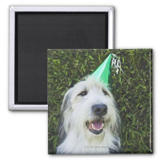 Dog wearing party hat square magnet