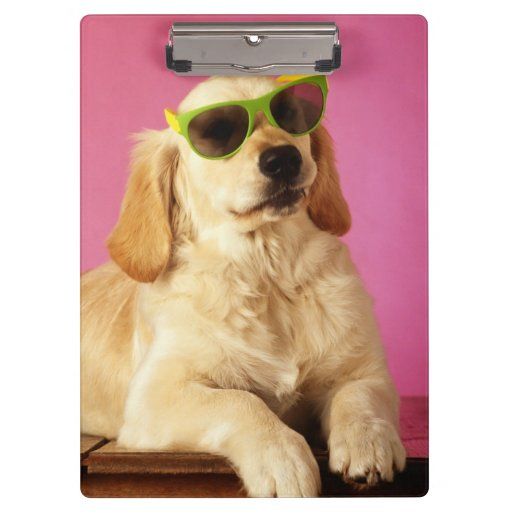Dog wearing sunglasses 2 clipboards