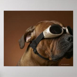 Dog wearing sunglasses 2 print