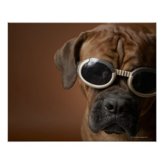 Dog wearing sunglasses 3 poster