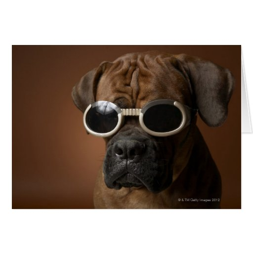Dog wearing sunglasses cards