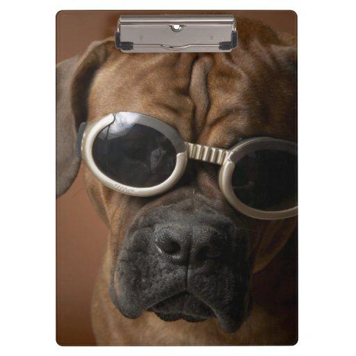 Dog wearing sunglasses clipboard