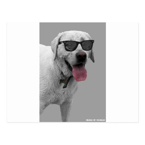 Dog wearing sunglasses postcards