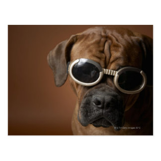 Dog wearing sunglasses post cards
