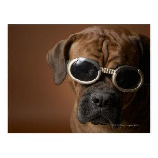 Dog wearing sunglasses postcard