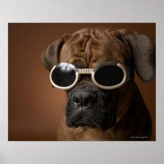 Dog wearing sunglasses print