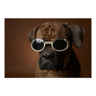 Dog wearing sunglasses poster