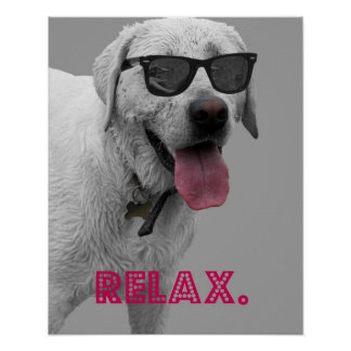 Dog wearing sunglasses, relax poster