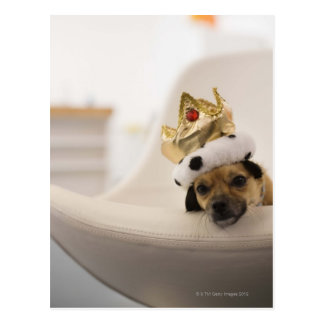 Dog with a crown postcard