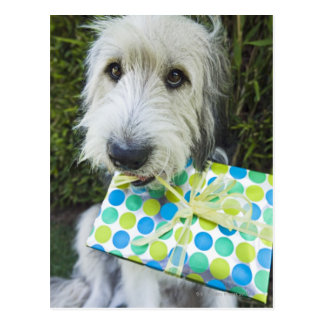 Dog with gift in mouth postcard