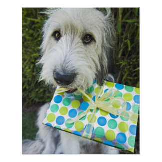 Dog with gift in mouth poster