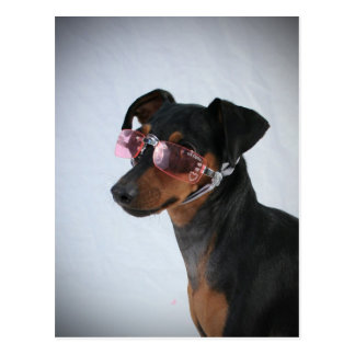 Dog With Pink Sunglasses Postcard