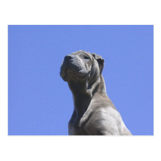 Dog Years... Postcard