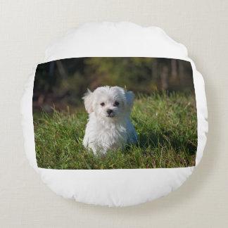 dog-young-dog-small-dog-maltese round pillow