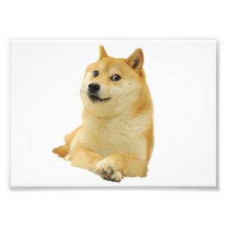 doge meme - doge-shibe-doge dog-cute doge photo print