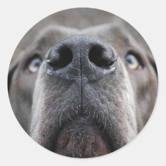 Doggennase Round Sticker