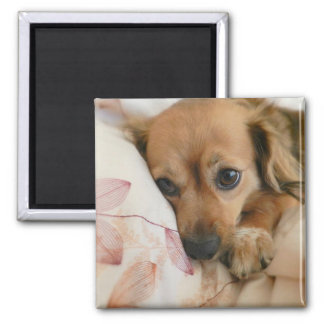 Doggie Lover Magnet
