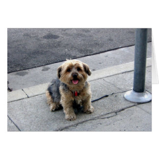 doggy in the street card