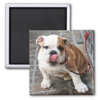 Doggy Kisses Magnet